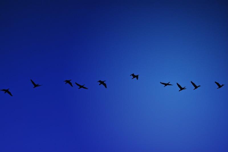 Cormorant Exit