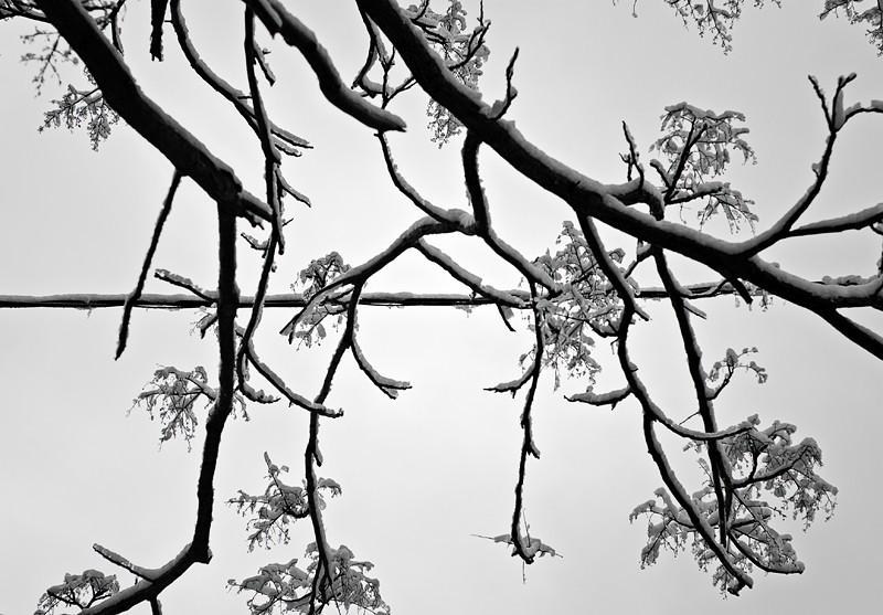 Line, Branch, Snow
