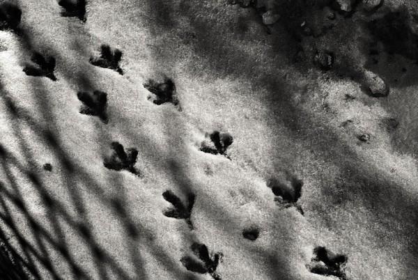 Pigeon Walk