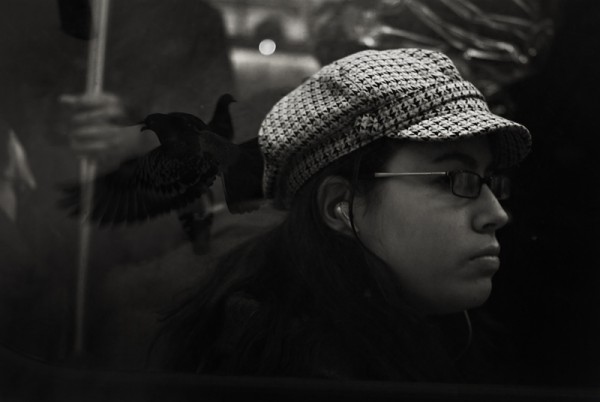 Paloma 2 [of 3]