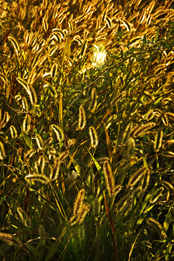 Grass Light