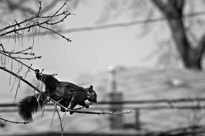 Determined Squirrel