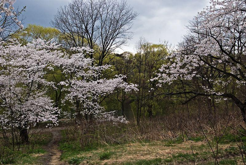 Spring at last 2