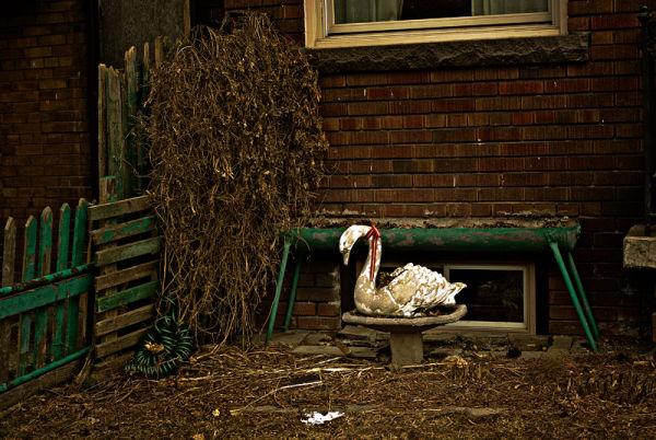 Forgotten Swan