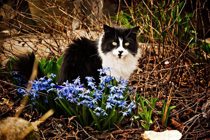 Garden Guardian