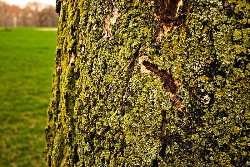 I like lichen 2