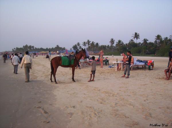 Horse rides on the Majorda Beach, Goa, India