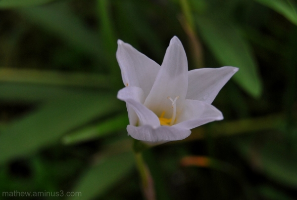white flower petals