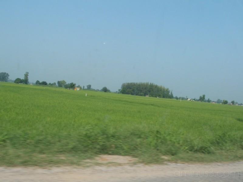 green feilds