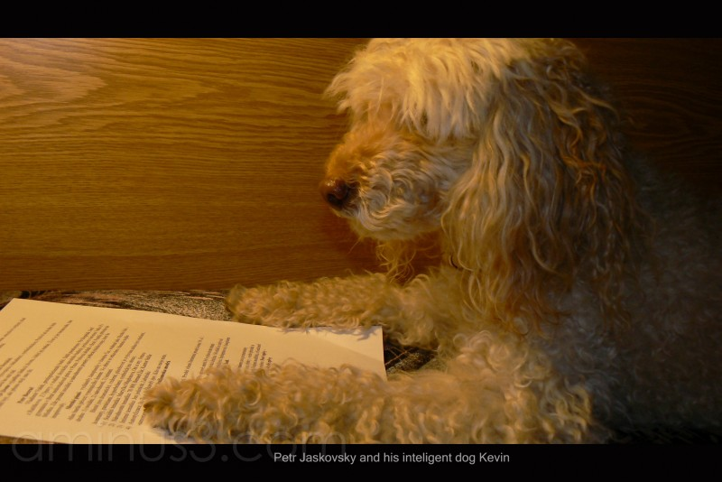 read,dog,inteligent dog