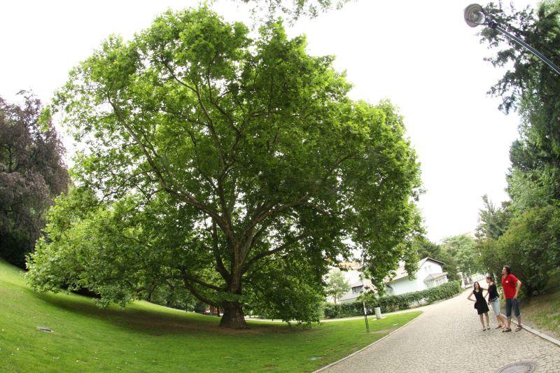 8mm tree
