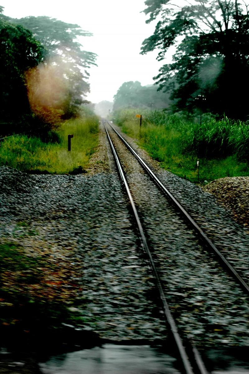 the rare track