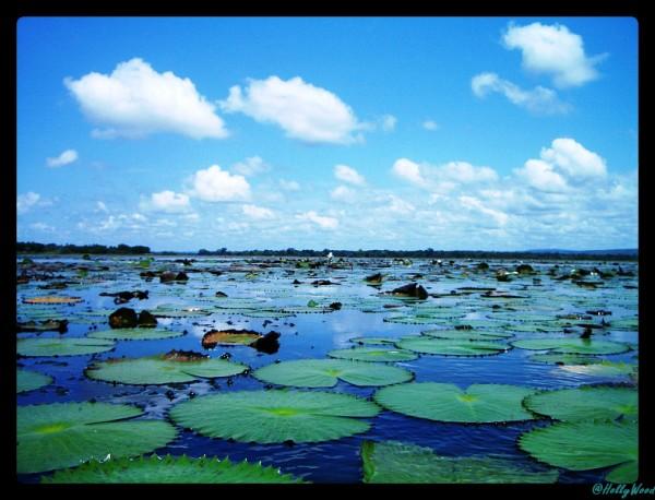 lac de Tengrela - Burkina Faso