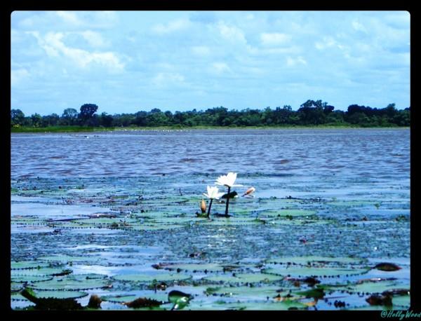 Burkina Faso - lac de Tengrela