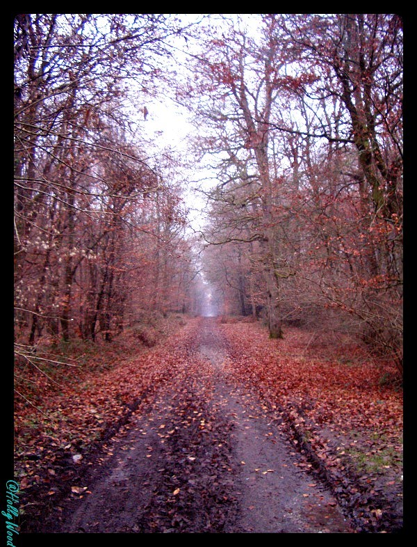 Foret de Broceliande, Britanny, France.