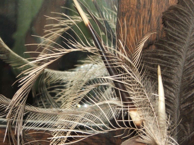 Plumes and Quills