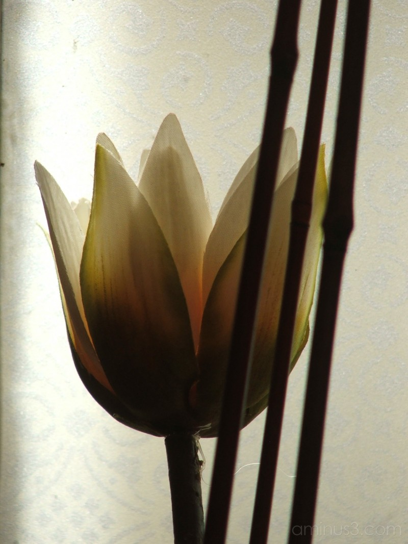indoor flower