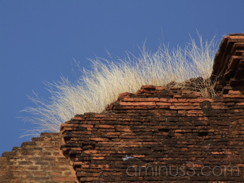 a burmese wall ...