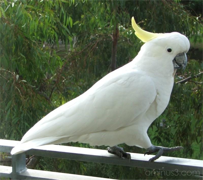 Cheeky Beaky