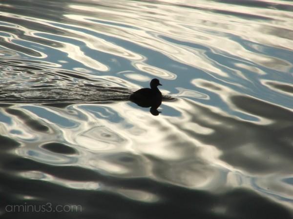 water 'n light 2/1