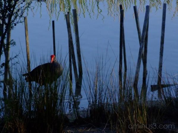Sticks and Reeds