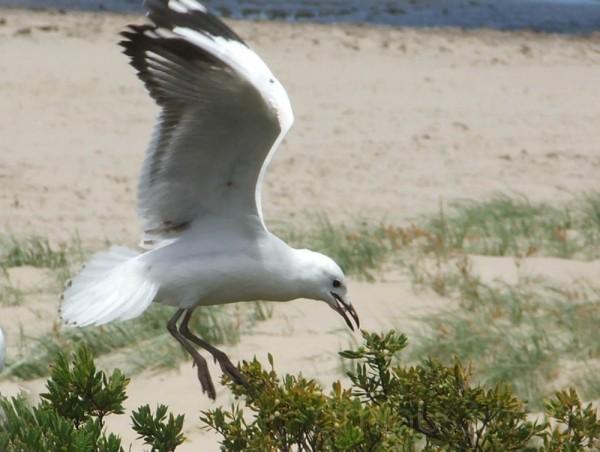 Bird eating 1