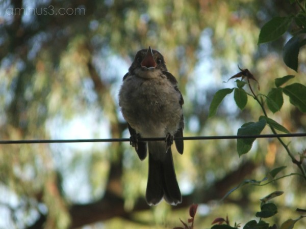 Birdsong 2