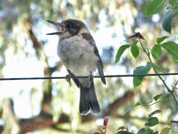Birdsong 5