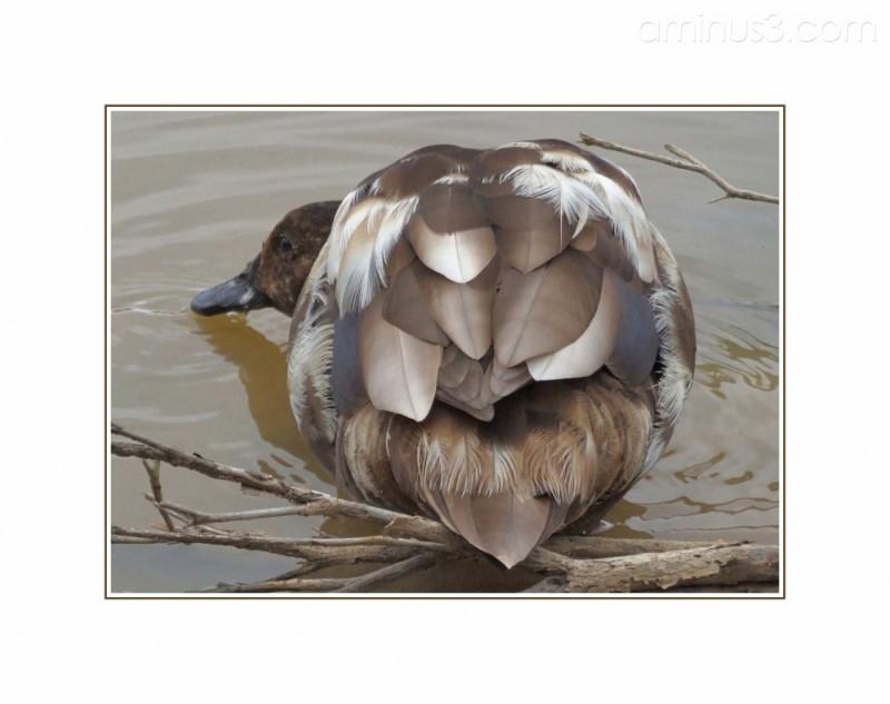 Duck!!