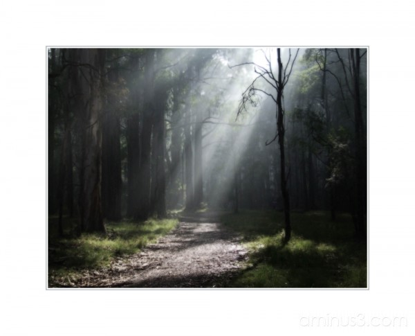 Promenade matinale 3