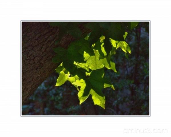 Morning leaves