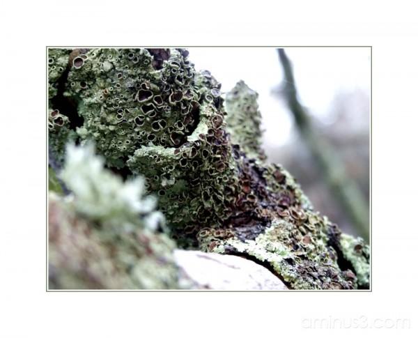 Mossy origins