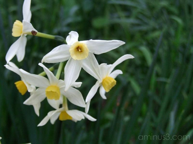 Heralding Spring