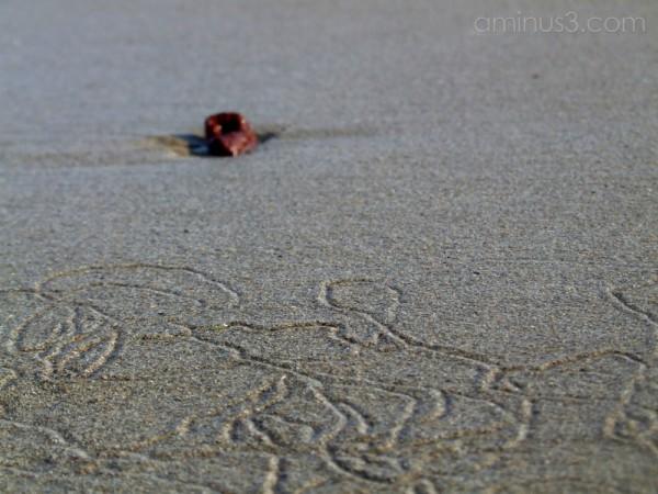 Coastal retrospective 1
