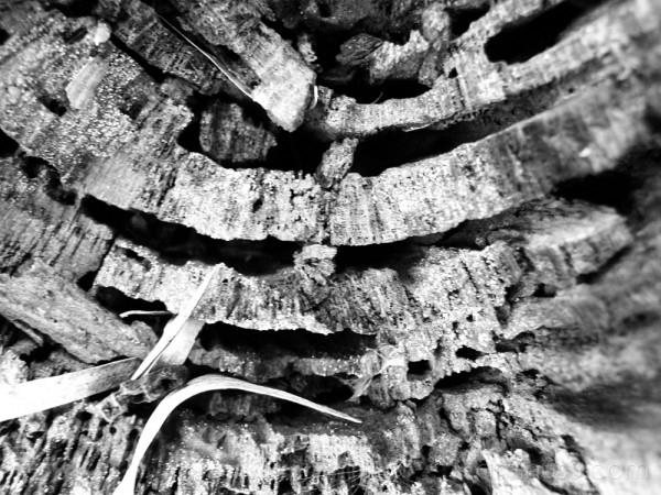 Wood [i]