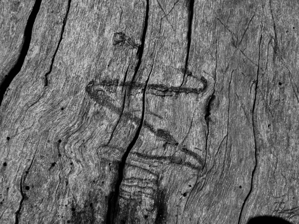 Wood [ii]
