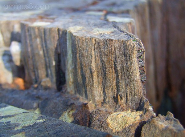 Wood [iii]