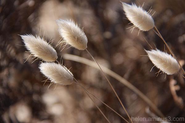 ... breeze