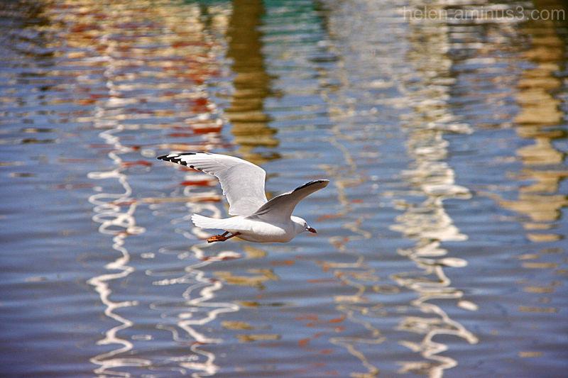 Impression of a bird's flight