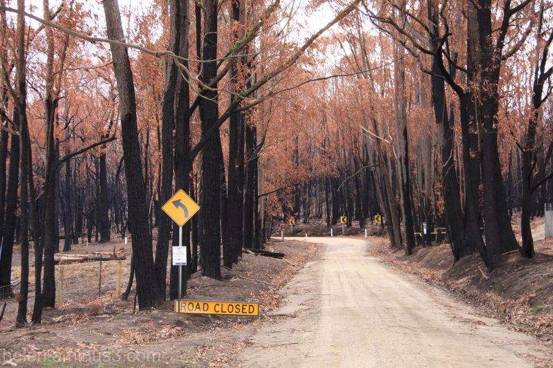 Bushfires - Two months later .... 1