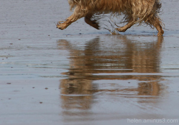 Wet paws