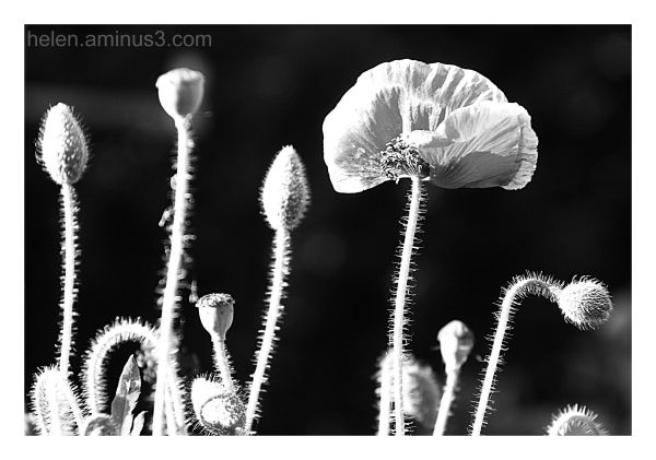 Stems - study in black and white