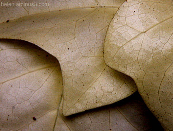 Veins and spots