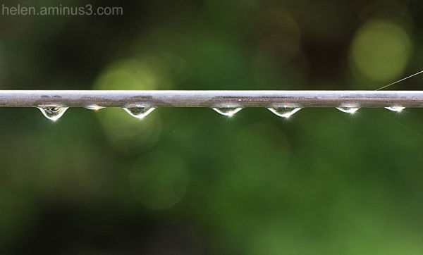 There are still raindrops on the gate