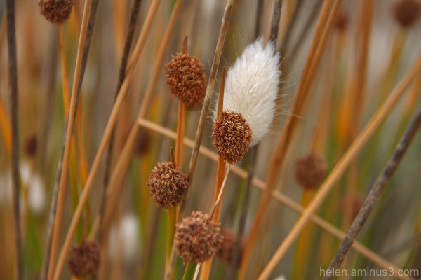 Weed in the reeds