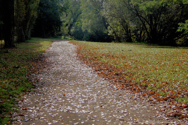 Leaves on the path