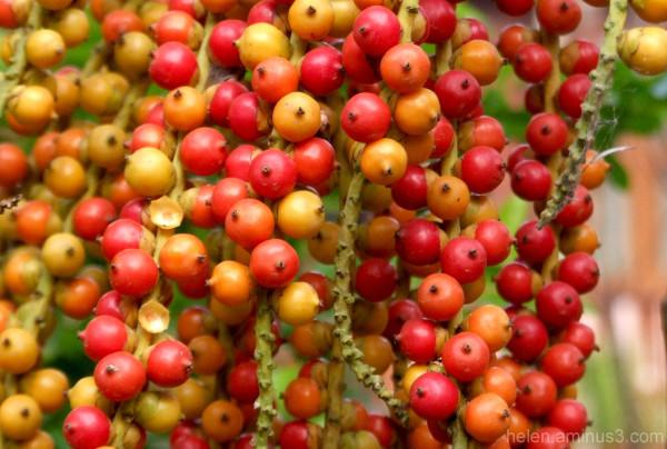 Cascade of berries