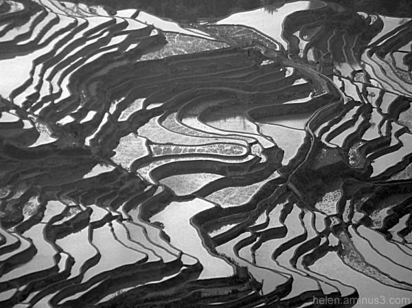 Rice paddy - Study in rhythm - 2