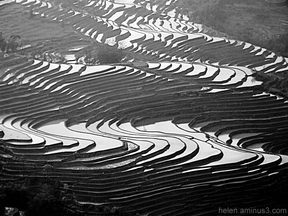 Rice paddy - Study in rhythm - 3