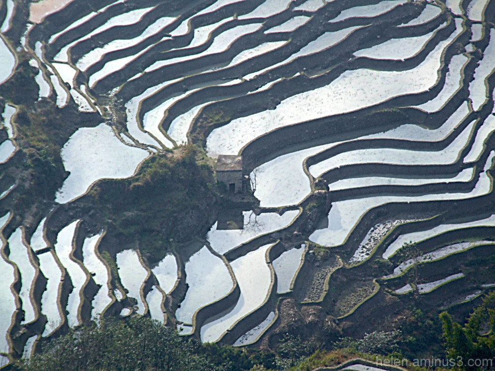 House in the rice paddies